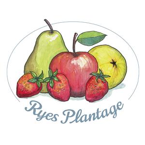 Ryes-Plantage